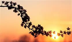 retired-sunset