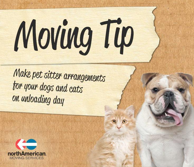 Pet Sitter Arrangements
