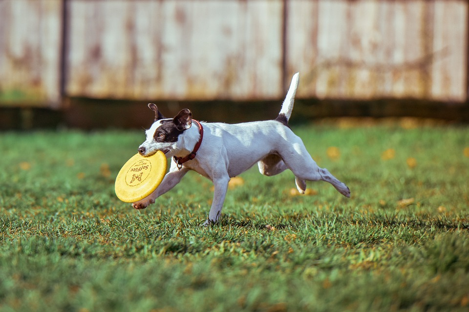 Dog with a frisbee in its mouth
